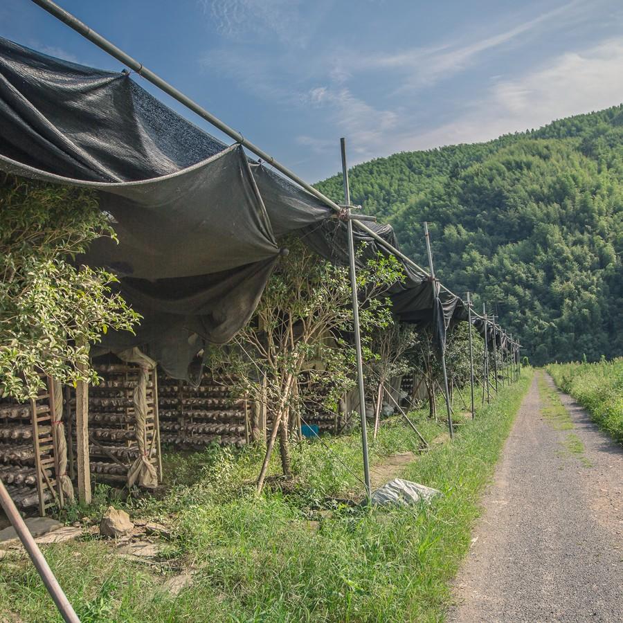 mushroom cultivation environment