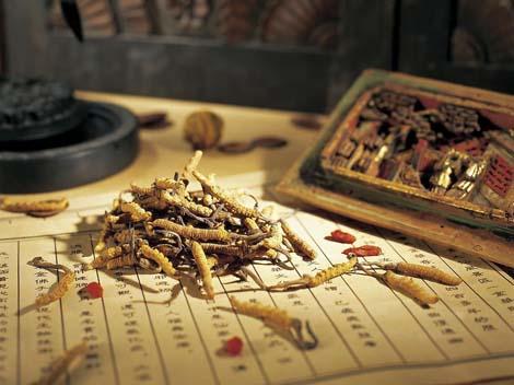 Medical Mushroom Extract