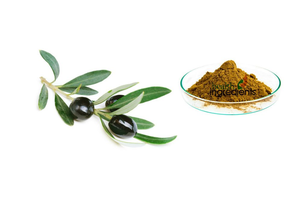 RD Health Ingredients striving to produce the best olive leaf extract 40%