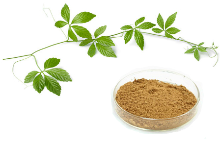 Buy Jiaogulan Extract From RDHealthIngredients