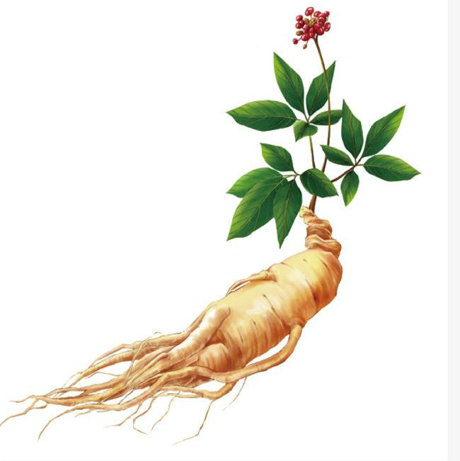 Ginseng Extract From RDHealthIngredients