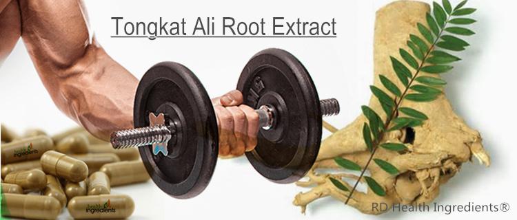 Tongkat Ali Root Extract