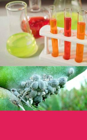 Cochineal Carmine Carminic acid 50% from RDHealthIngredients