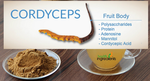 Coryceps Sinensis Extract From RDHealthInredients