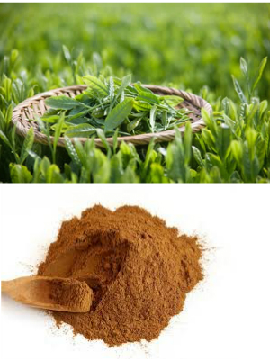 green tea extract from RDHealthIngredients