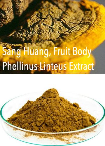 Sang Huang Phellinus Linteus Extract
