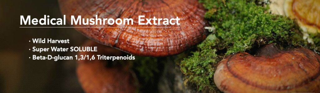 medical mushroom dual extraction